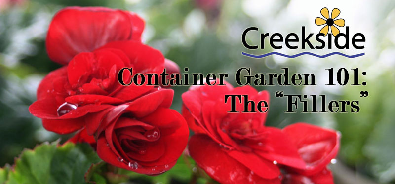 Container Garden 101: The Filler
