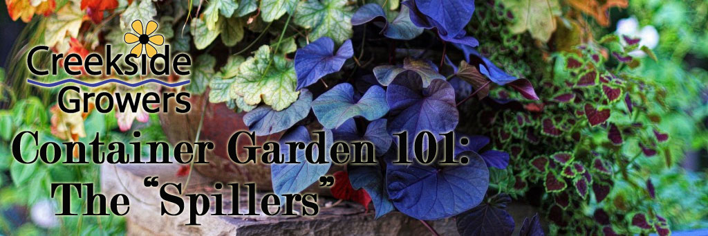 Container Gardens 101: The Spiller