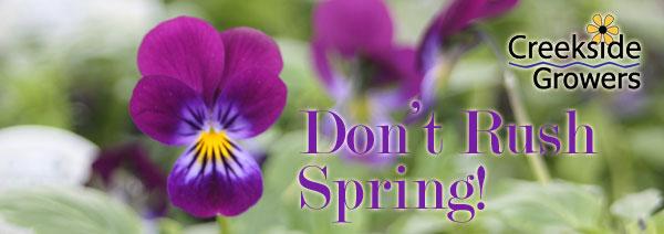 Don't Rush Spring